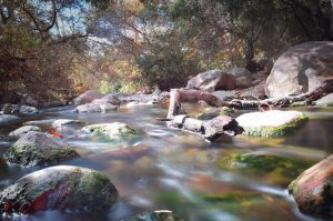 2018 best in show winner-image of Escondido Creek